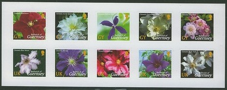 2004 GBG - SBG75 - Guernsey Clematis - GY BP x 1 (S/A)